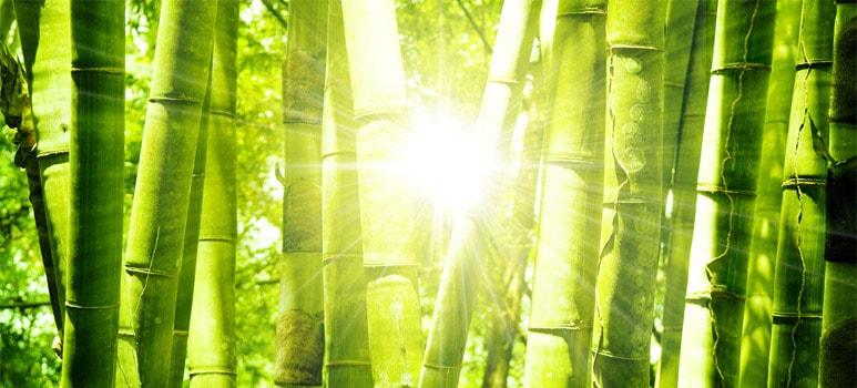 Bamboe, een echte milieuactivist!